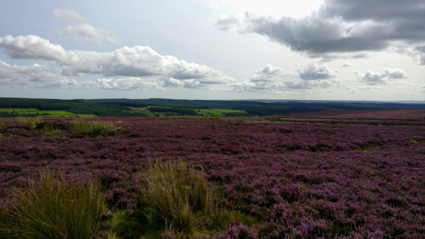 Heather moorland