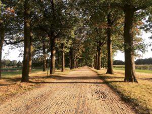 strada campina