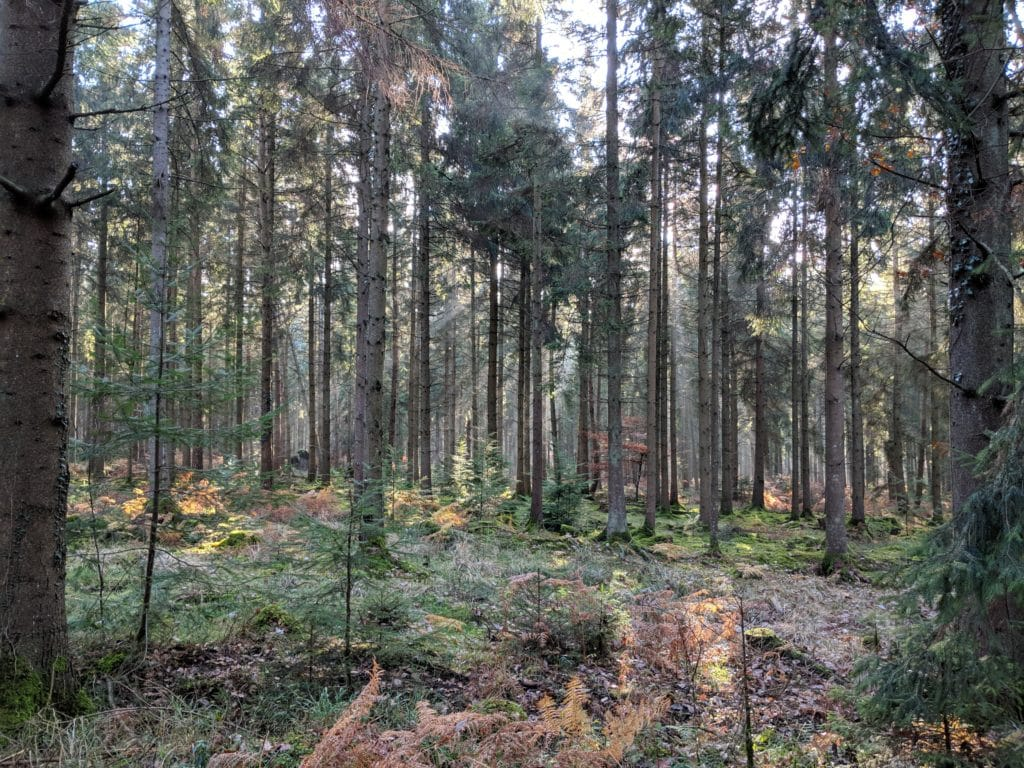 Dirty Devil Gravel Series - thick forest view