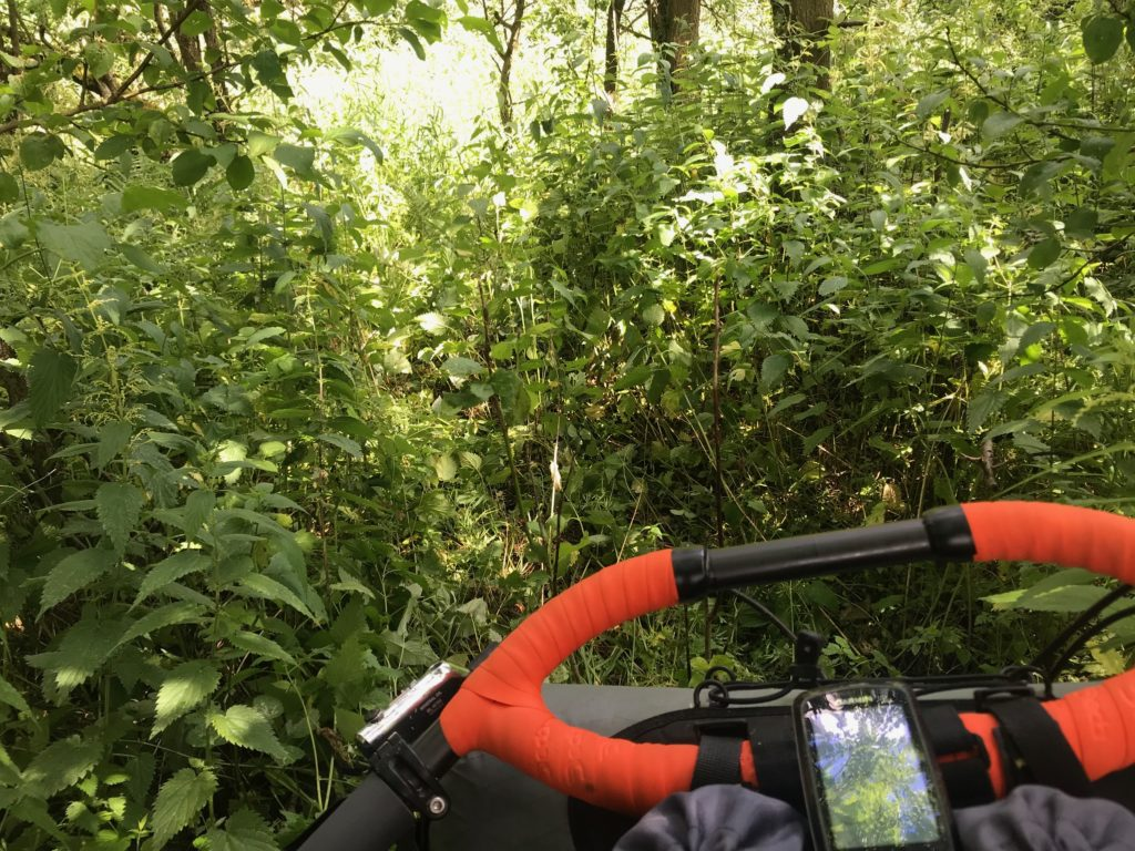 pushing a bike through the undergrowth