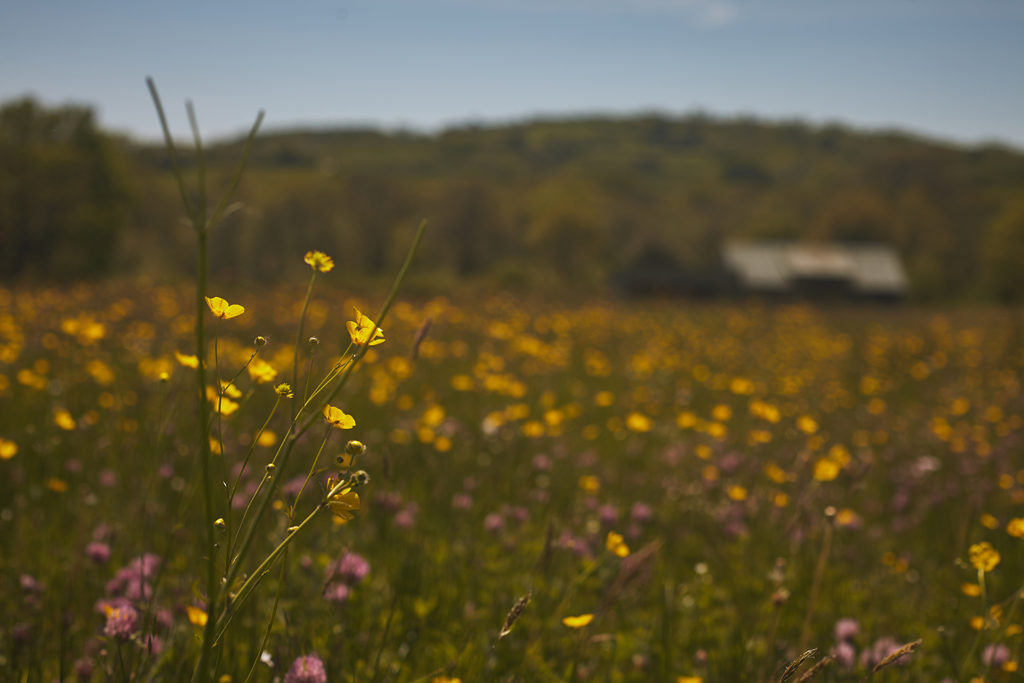 Wild meadows and rolling hills in Dorset
