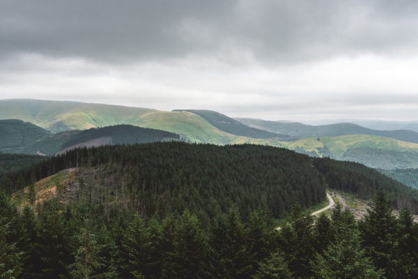 The rolling pine forests of the Dyfi Valley at Grinduro 2021 in Wales